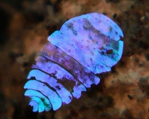VnExpress-Sea-sapphire-s-amazi-8531-1977