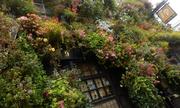 Những ô cửa ngập tràn sắc hoa giữa lòng London