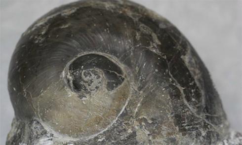 Phát hiện hóa thạch hơn 240 triệu năm ở Nghệ An