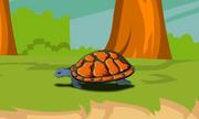 Chú rùa nhỏ - Bài thơ dễ nhớ cho trẻ em