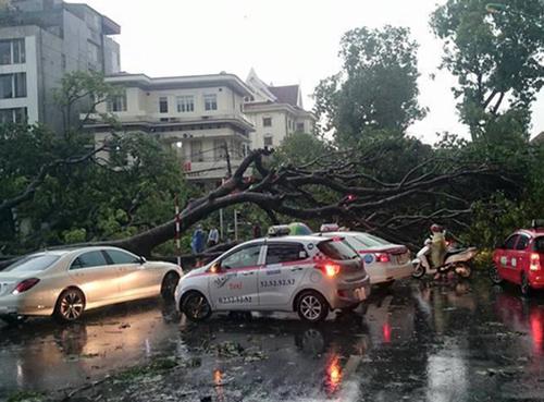 Trận giông lốc chiều 13/6 tại Hà Nội làm 2 người chết, hàng nghìn cây lớn đổ. Ảnh: Quý Đoàn.