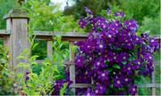 Canada rực rỡ những sắc hoa