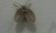 Làm thế nào để diệt côn trùng này?
