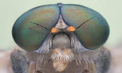 VNE-Insect-Inspired-Eyes-Give-9819-9181-