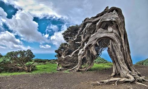 Những cây cổ thụ hình dáng lạ thường khắp thế giới