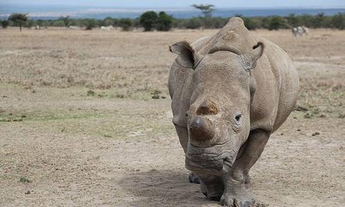 Tê giác húc chết hướng dẫn viên du lịch ở Zimbabwe