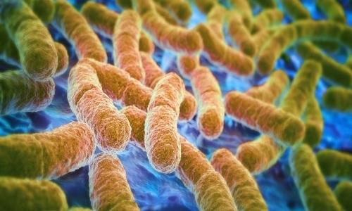 Cấy phân để tiêu diệt vi khuẩn kháng thuốc trong ruột