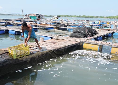 Người dân cho rằng nước sông ô nhiểm khiến cá nuôi lồng của họ chết hàng loạt. Ảnh: Xuân Thắng.