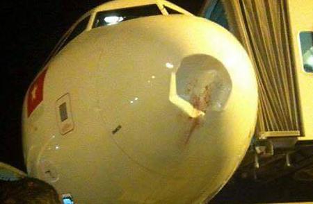 Máy bay bị chim đâm móp đầu