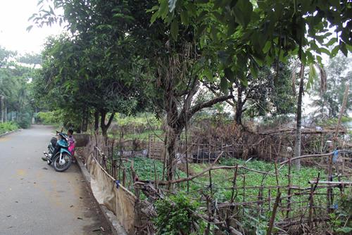 """Người Sài Gòn """"xẻ thịt"""" công viên để trồng rau 1"""