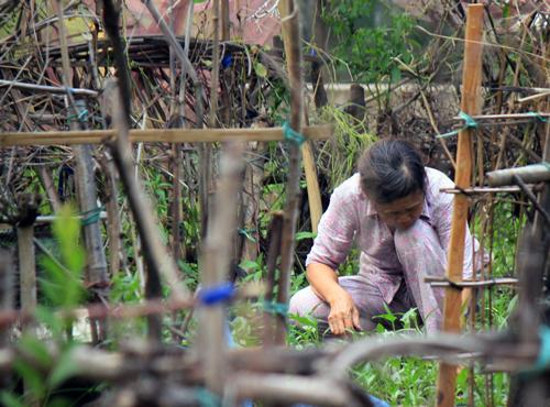 """Người Sài Gòn """"xẻ thịt"""" công viên để trồng rau 2"""