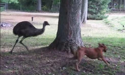 Đôi bạn chim và chó chơi trò rượt đuổi
