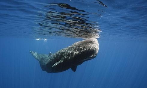 Tiếng ồn - sát thủ vô hình trong lòng đại dương