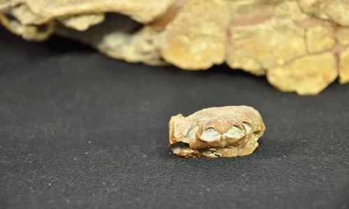 HoaDan-Weirdest-turtle-that-ev-2883-4730