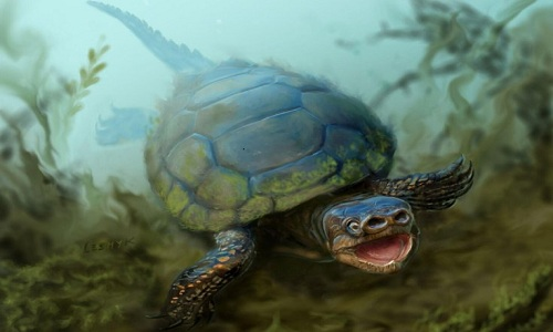 HoaDan-Weirdest-turtle-that-ev-8654-4573