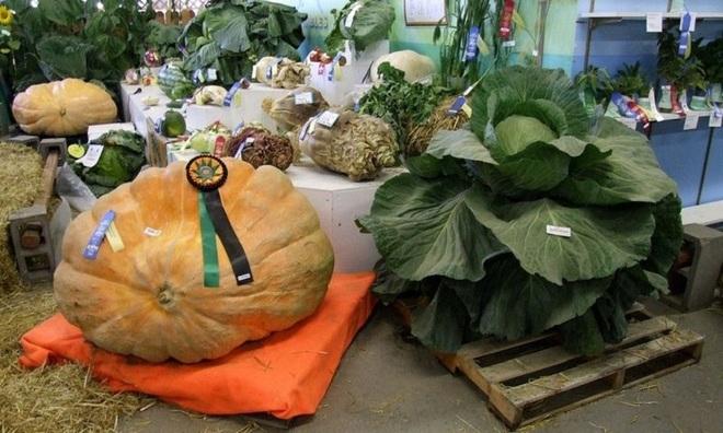 VNE-Alaska-s-Giant-Vegetables-1-1445501236_660x0.jpg
