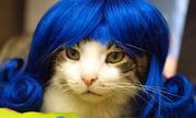 Khi mèo cưng hóa thân thành 'quý cô' sang chảnh