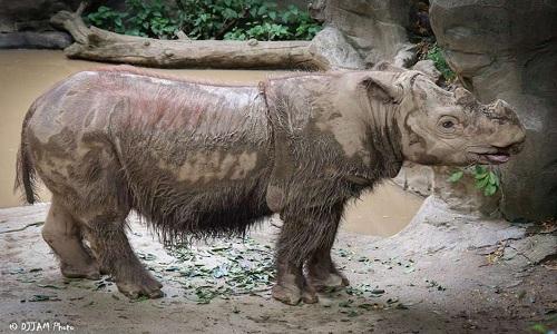 VNE-Rhino-1-6088-1446524486.jpg