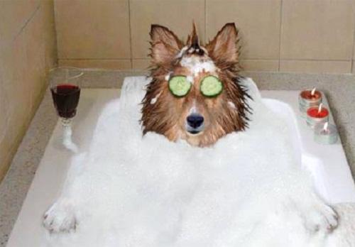 Tắm như thế này mới là tắm chứ!