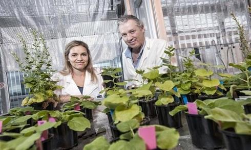 Cây nghìn năm giữ bí quyết trồng rau trong vũ trụ