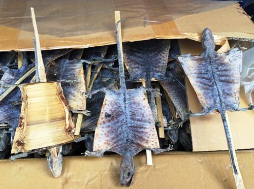 Hàng nghìn con rùa biển, tắc kè sấy khô vận chuyển vào Việt Nam 2