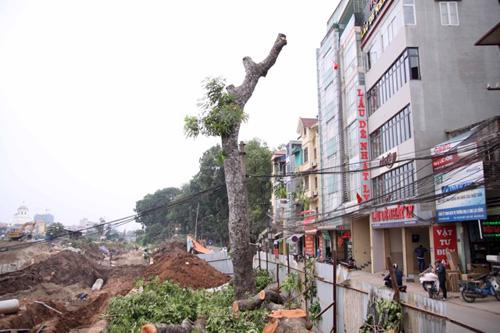Hà Nội chặt gần 30 cây xanh làm đường giao thông 1