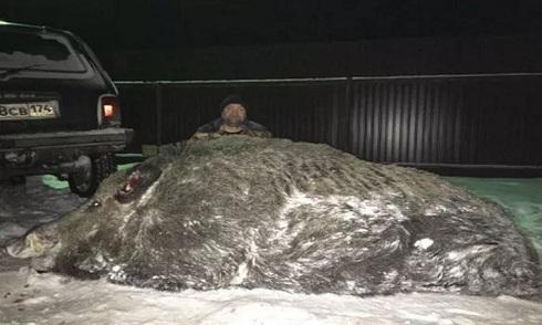 Bắn lợn rừng hơn 500 kg, thợ săn Nga bị chỉ trích