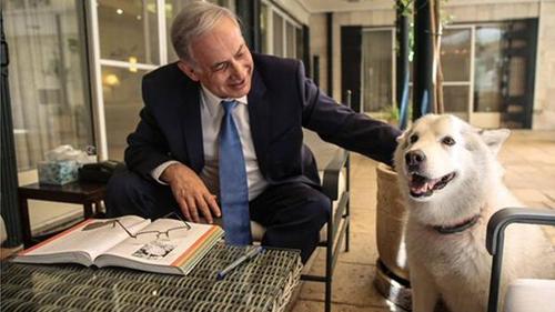 ÔngNetanyahu và chú chó Kaiya. Ảnh: Reuters