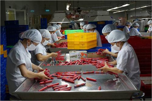 Nhân viên tại nhà máy AFF đang kiểm lựa thành phẩm.