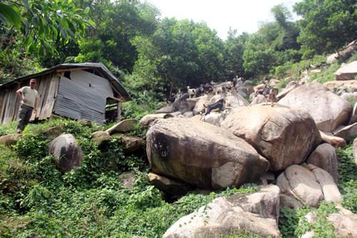 Trăn núi ở Quảng Nam từng quấn chết người 2