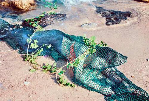 Quảng Nam truy tìm chủ trang mạng đăng tin xuất hiện nàng tiên cá 2