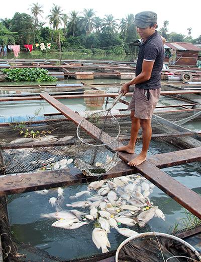 """Dân làng cá bè Đồng Nai: """"Tết này trắng tay rồi"""" 2"""