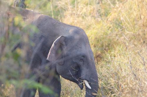 Lần đầu tiên tiếp cận được voi rừng ở Yok Đôn 1