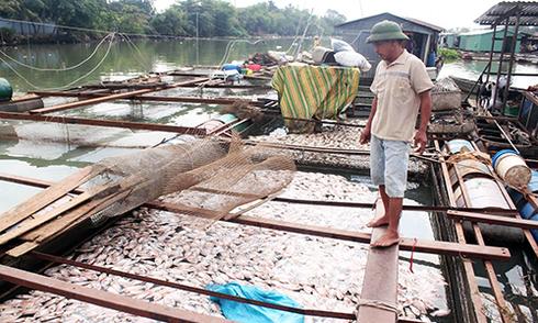 370 tấn cá chết ở làng bè Đồng Nai do 'nuôi sai cách'