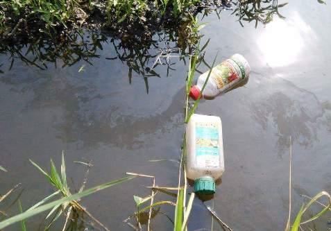 Dùng dầu nhớt tưới rau muống ở làng rau Sài Gòn 2