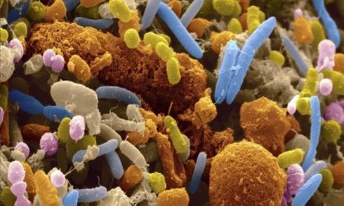 39 nghìn tỷ vi khuẩn trên cơ thể người