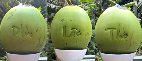 """Giá bán mỗi trái dừa """"độc"""" này gấp 60 lần bình thường. Ảnh: Cửu Long"""