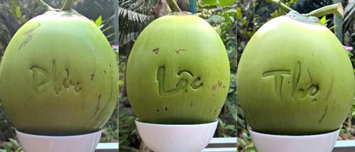 Giá bán mỗi trái dừa