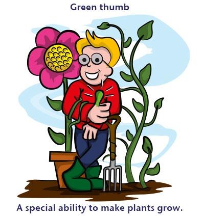 Green thumb: the ability to make plants grow: khả năng trồng cây giỏi  Ví dụ: Robert is an expert gardener. Everyone says he has a green thumb  (Robert là một chuyên gia về vườn tược. Mọi người thường nói rằng cậu ấy trồng cây nào nên cây nấy)