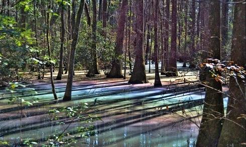 Đầm lầy cầu vồng ở Florida gây sốt