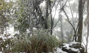 Tuyết rơi trên núi Ba Vì, Hà Nội
