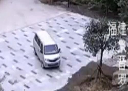 Chú chó cắn đuôi cứu bạn thoát khỏi đâm xe 2