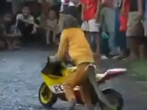 Khỉ giả chết cướp xe hơi 4