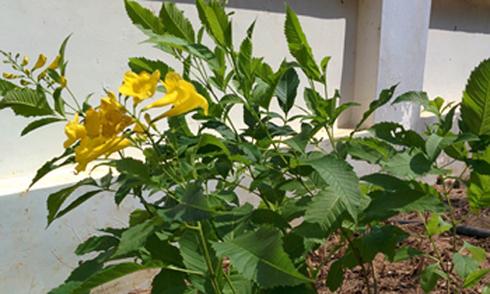 Đây là hoa gì?