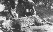 'Hai nhà sư Sài Gòn xưa đánh chết cọp giữa ngày Tết' hot trên mạng XH