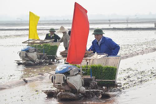 Bí thư, Chủ tịch Hà Nội đi cấy cùng nông dân 2