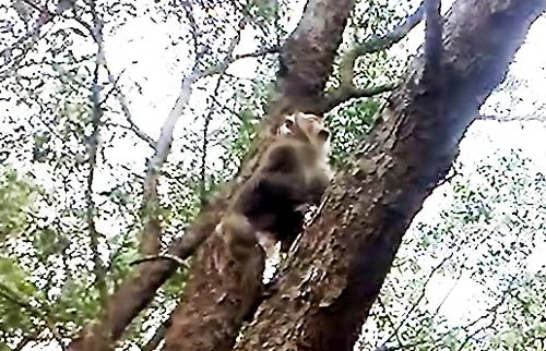 Bị bỏ rơi trên cù lao sông Hậu, đàn khỉ phá dân làng 1
