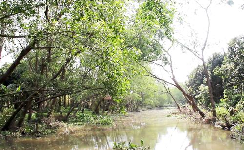 Bị bỏ rơi trên cù lao sông Hậu, đàn khỉ phá dân làng 3