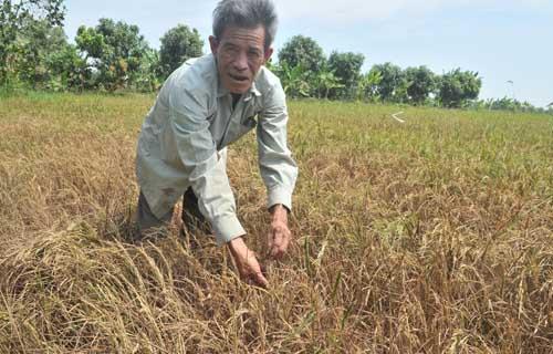 """Thủ tướng Nguyễn Tấn Dũng: """"Cả hệ thống chính trị phải vào cuộc chống hạn, mặn"""" 3"""