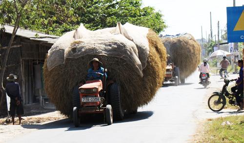 Giá rơm chi trâu, bò ăn ở Bến Tre vô cùng đắt, 4000-5000 đồng/2kg, tương đương giá 1kg lúa. Ảnh: Cửu Long